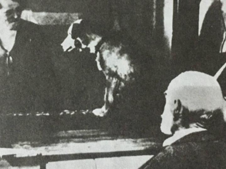İvan Pavlov ve Klasik Koşullanma