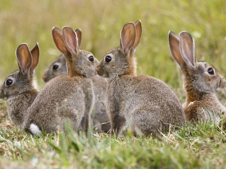 Tavşanların Habitatları