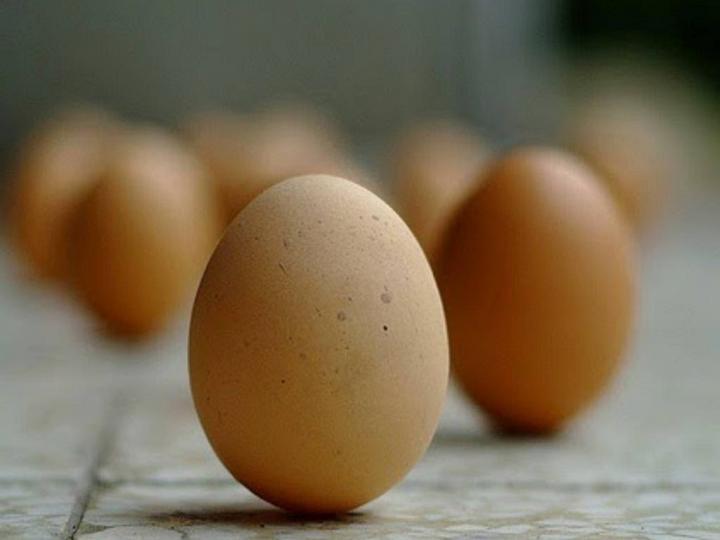 Yumurta Deneyi