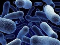 Kemosentetik Bakteriler