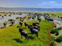 Ngorongoro Koruma Alanı